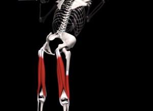 バーピー 下半身 筋肉