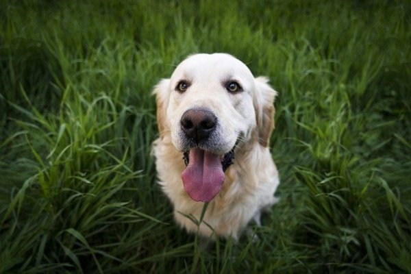 10 Reasons Why Your Dog Can Breath Fast