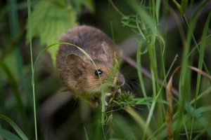 How Do You Know You Have a Pest Control Problem?