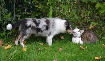 Tips To Have A Great Yard For Your Pets In The Spring