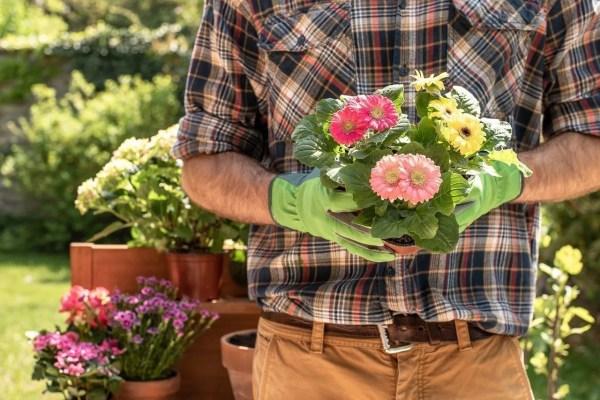 Beginner's Guide How to Start a Garden