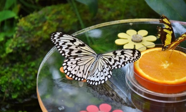 butterfly on bird bath