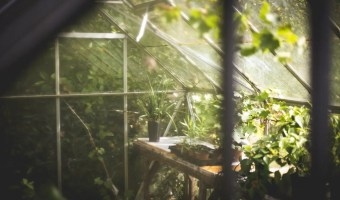 3 Ways to Improve Your Greenhouse Gardening