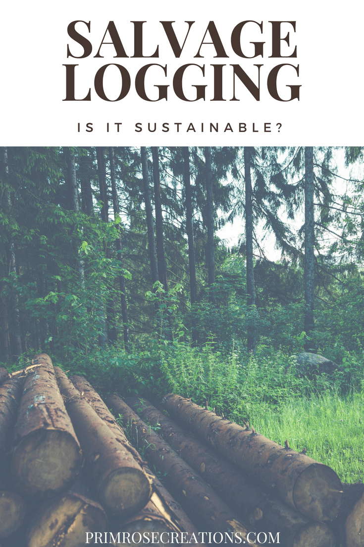 Unsustainable practice of salvage logging confirmed #primrosecreations #lovethelifeyoulive #ecology