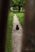 Pisica Ivancăi