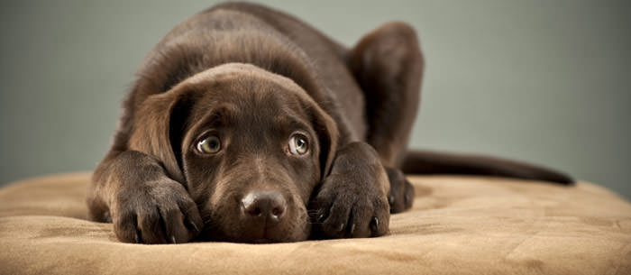 Ways To Help Your Dog's Fear Of Loud Noises