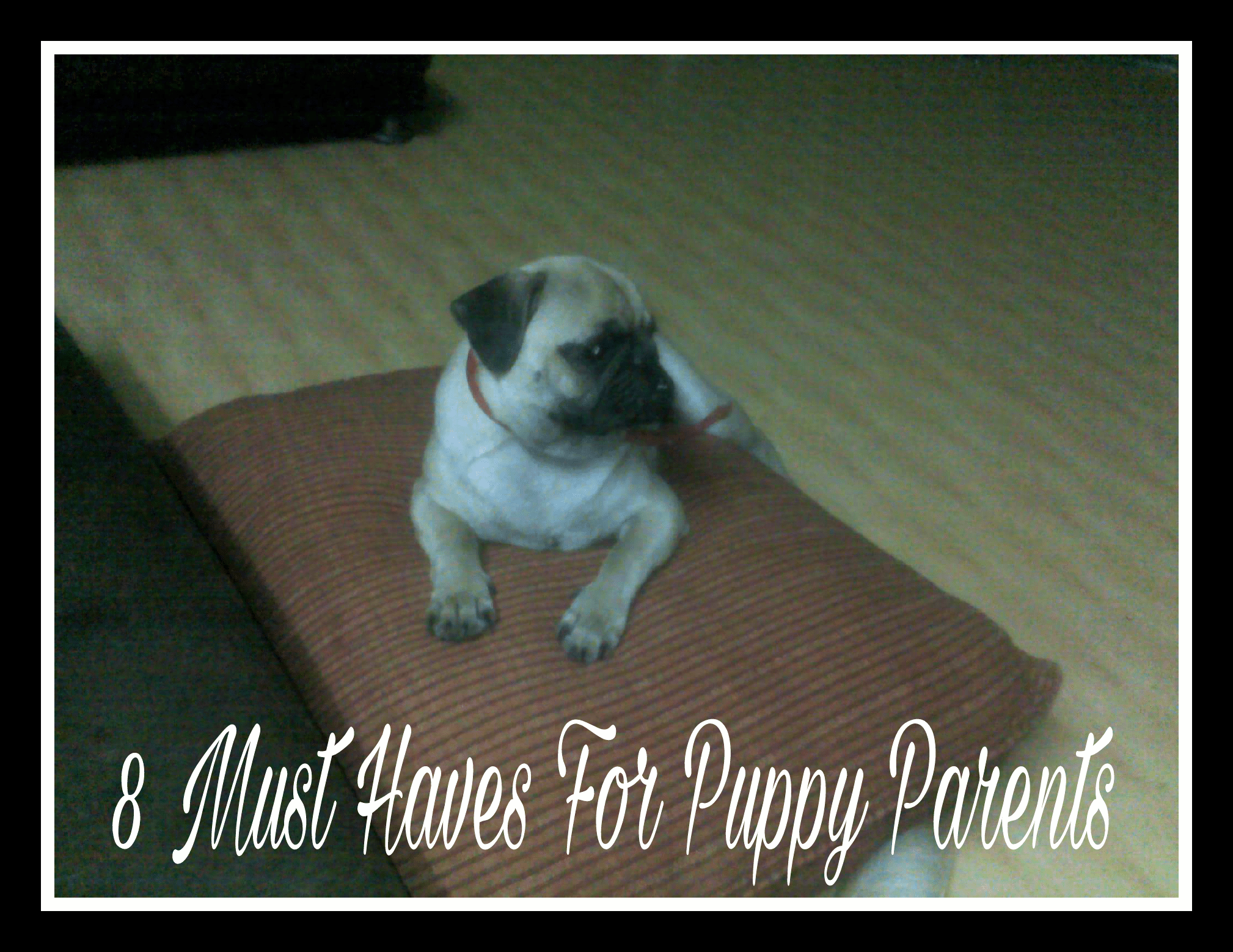 8 Must Haves For Every Puppy Parent