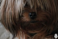 chewbacca closeup