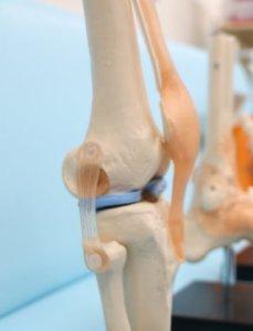 美脚・膝関節
