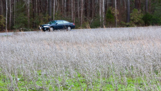 Soy planted on city property where an illegal pig farm was uncovered this past month could be seen this week from Salem Road. [John-Henry Doucette/The Princess Anne Independent News]