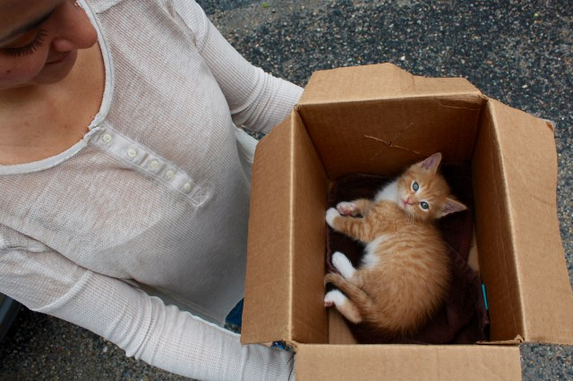 This kitten met its new owners recently at the Blackwater Trading Post. [John-Henry Doucette/The Princess Anne Independent News]
