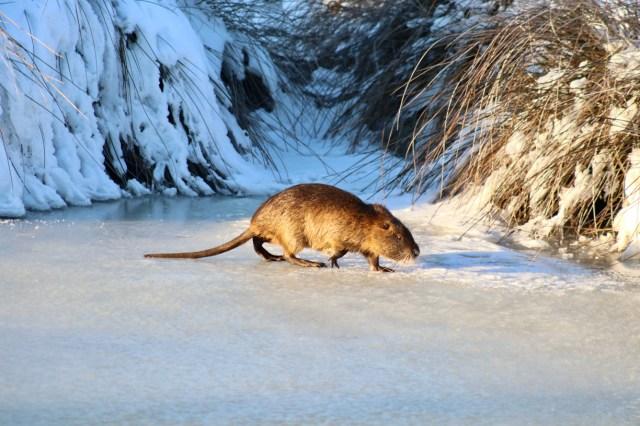 Icy Stroll