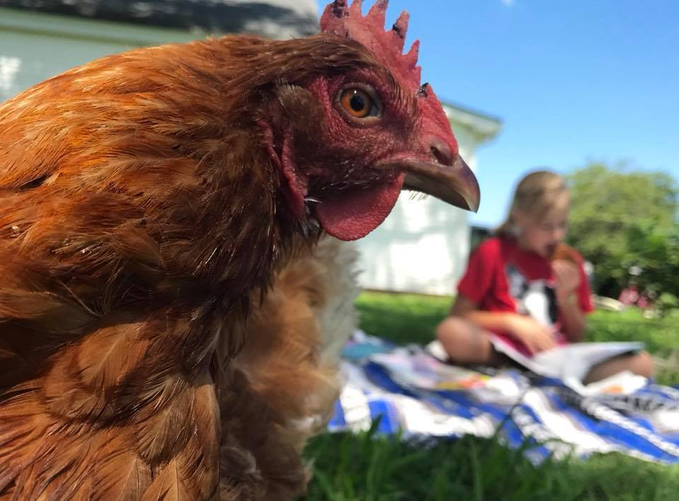 From the Editor: So long to a hen called Hope, an unlikely survivor