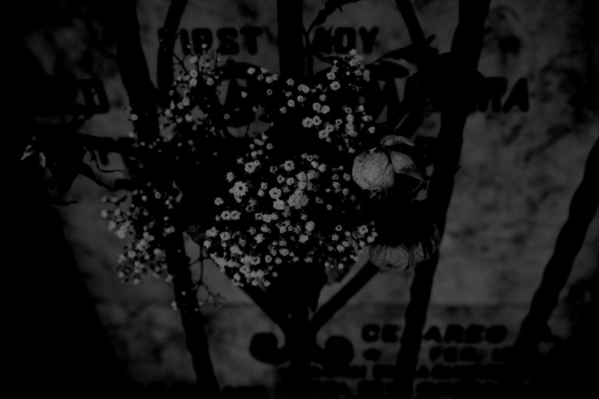 descendant pluto blossom