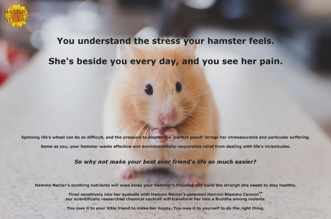 meditation hamster discovers long-lasting relief