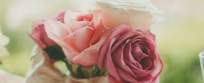 beautiful rose for astrology's valentine sweetheats