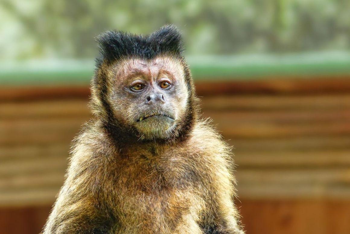 monkey like a sponge for alla that ragin'