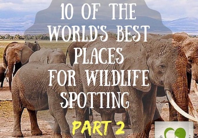 Best Spots to see Wildlife | collaboration
