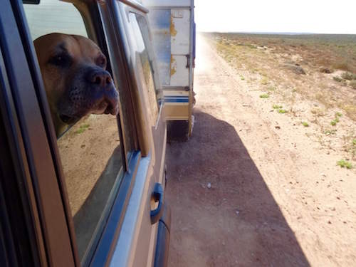 Dog and the road | Van Life