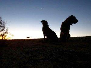 The Dogs | Van Life