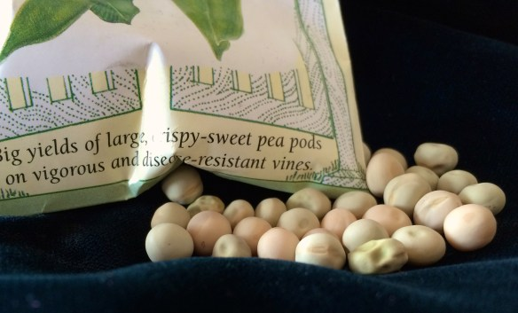 The growing season for 2015 begins on Tuesday, on traditional pea-planting day.