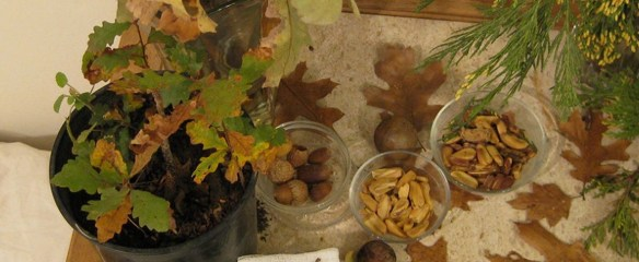"Acorns and oak leaves photo illustration from ""Bitter Medicine is Stronger,"" The Multispecies Salon website companion to the book. Click on photo for link to site."