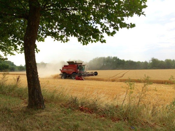 wheat harvest in Loire Valley
