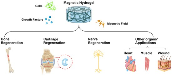 Magnetic-hydrogel-Frontiers.jpg?resize=5