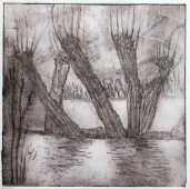 Willows Etching 1