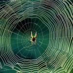Spider Photos