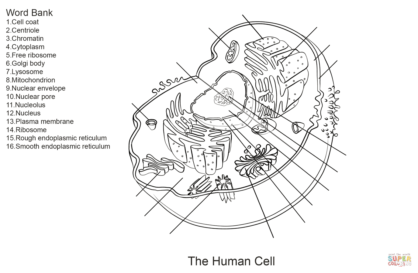 Blank Plant Cell Diagram