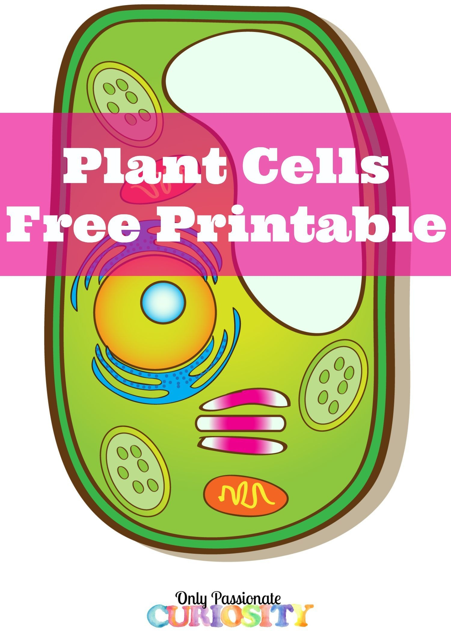 Plant Cells Printable Pack Science