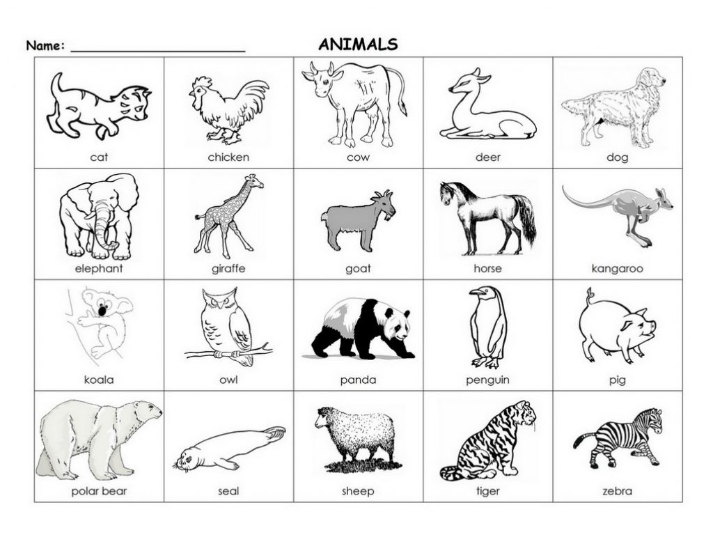 Printable Animal Flash Cards 87 Images In Collection