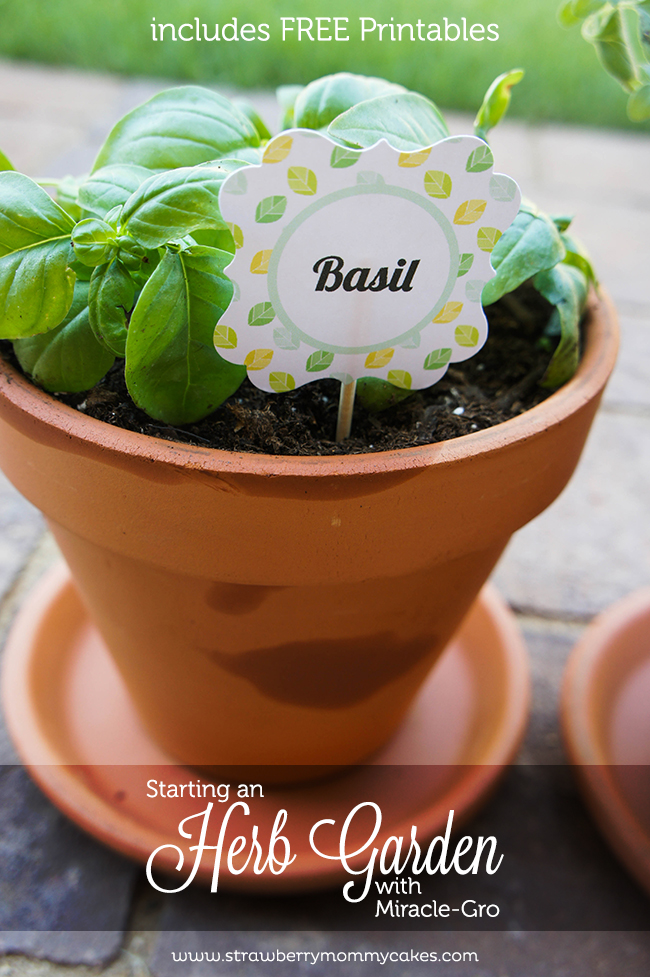 Starting an Herb Garden with Miracle-Gro | Includes FREE Printables on www.strawberrymommycakes.com