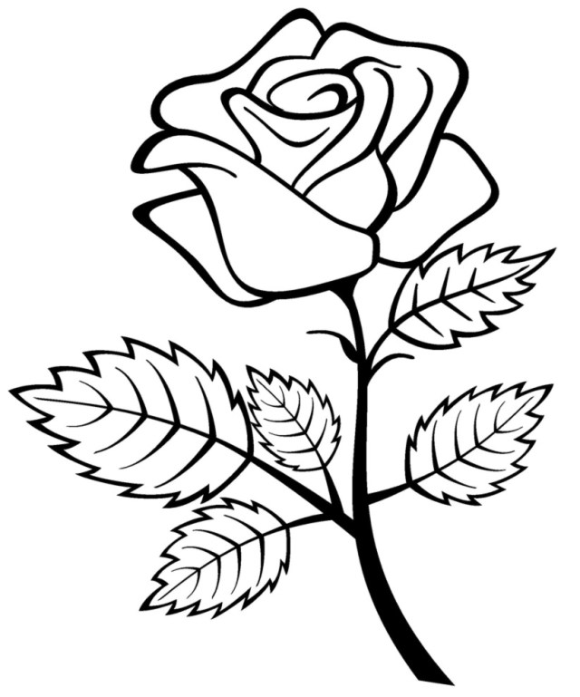 Drawing Roses #29 (Nature) – Printable coloring pages