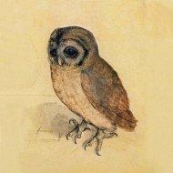 -little-owl-albrecht-durer