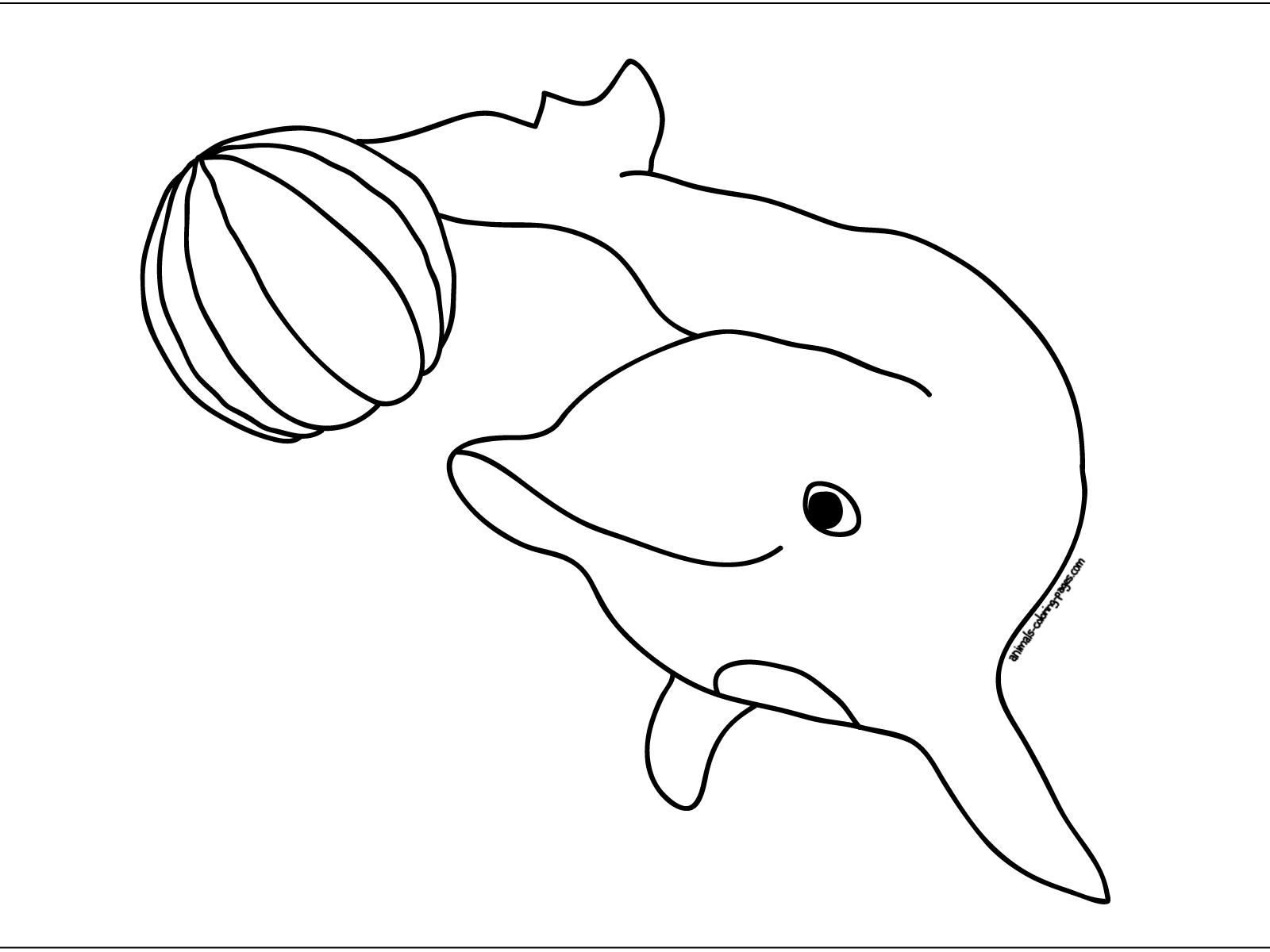 Dolphin Worksheet To Print