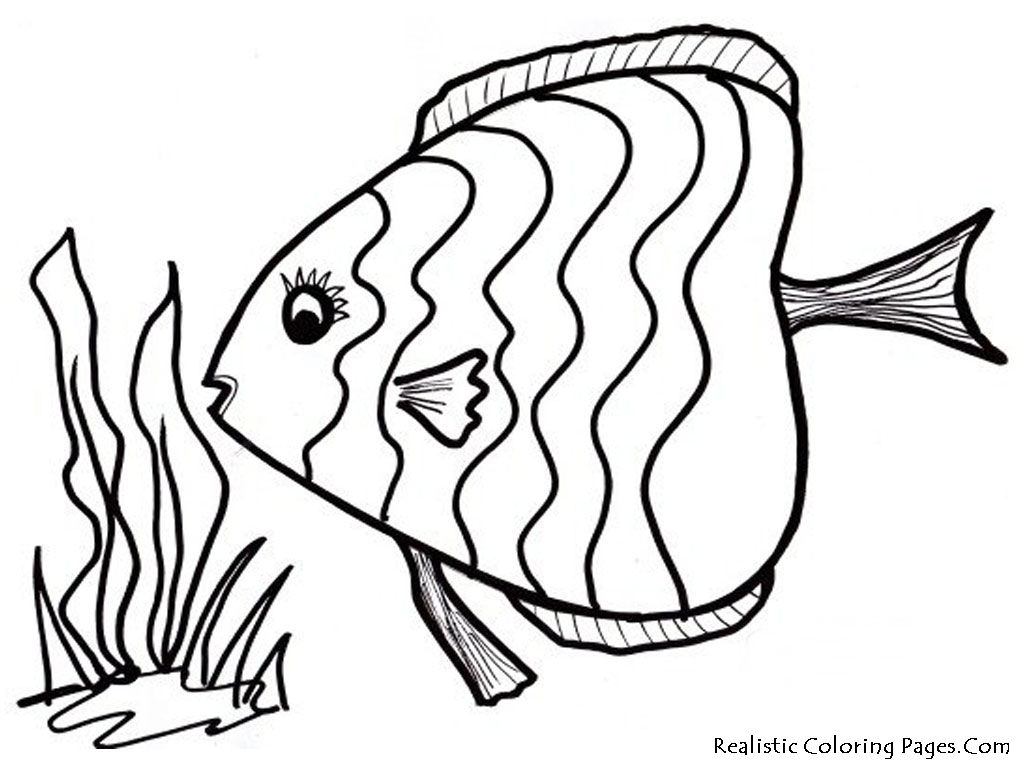 Mesmerizing Beauty 39 Fish Coloring Pages And Crafts Pictures