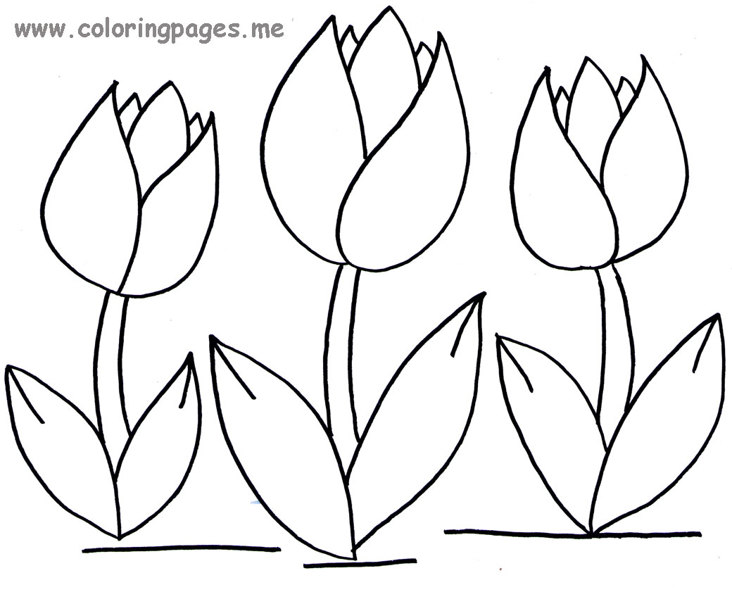 Tulips flowers coloring pages and Tulips Crafts : spring ... | colouring pages tulip flowers
