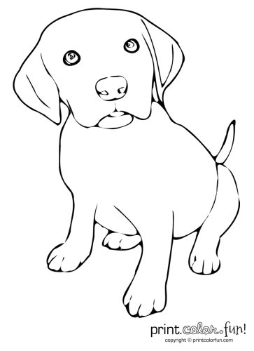 Real Puppy Cute Dog Clip Art
