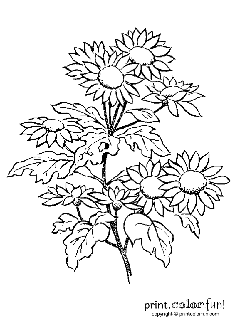 Flowers on zoo scene coloring page