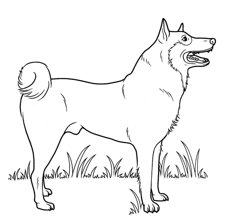 Kolorowanki Kolorowanki Pies Do Druku Dla Dzieci I Doroslych