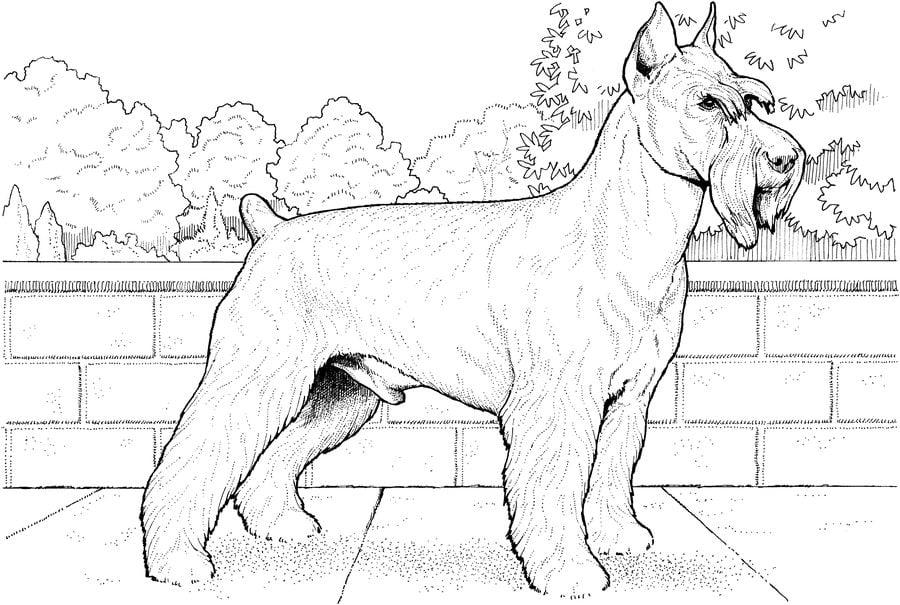 ausmalbilder ausmalbilder hunde zum ausdrucken
