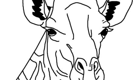 Coloring pages: Giraffes