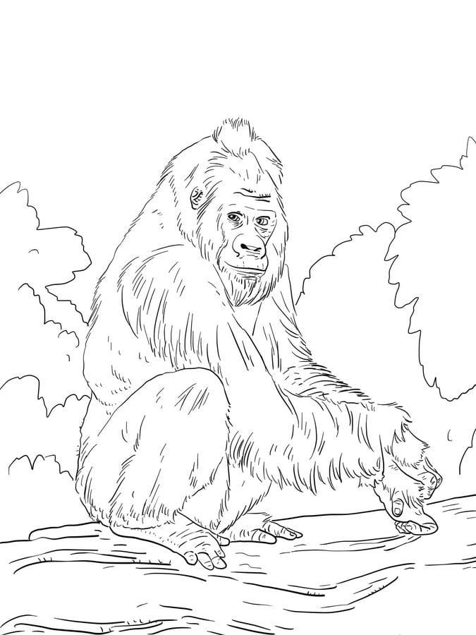 Ausmalbilder Ausmalbilder Gorillas Zum Ausdrucken Kostenlos Für