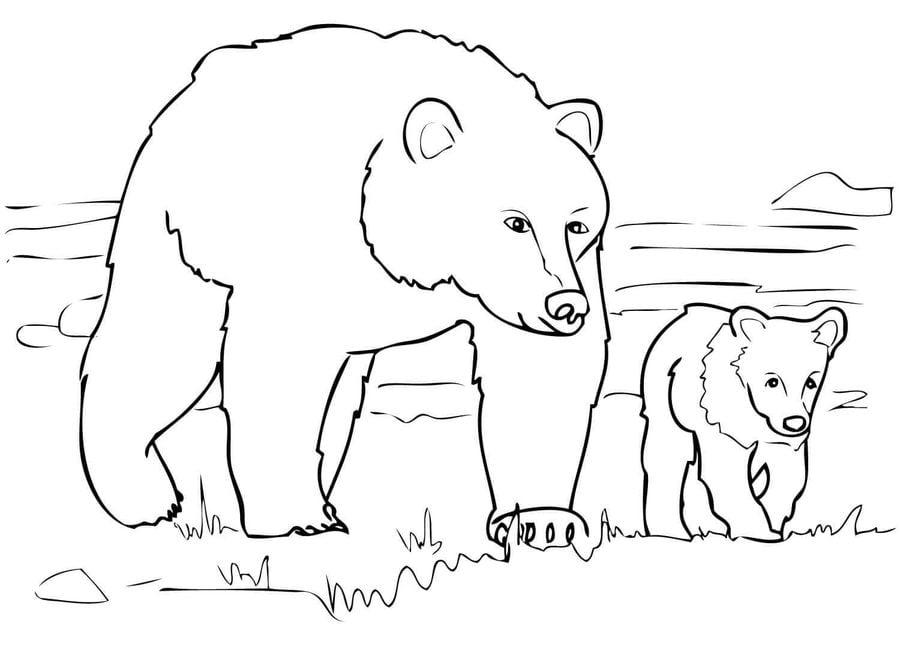 Dibujos Para Colorear Oso Grizzly Imprimible Gratis Para Los