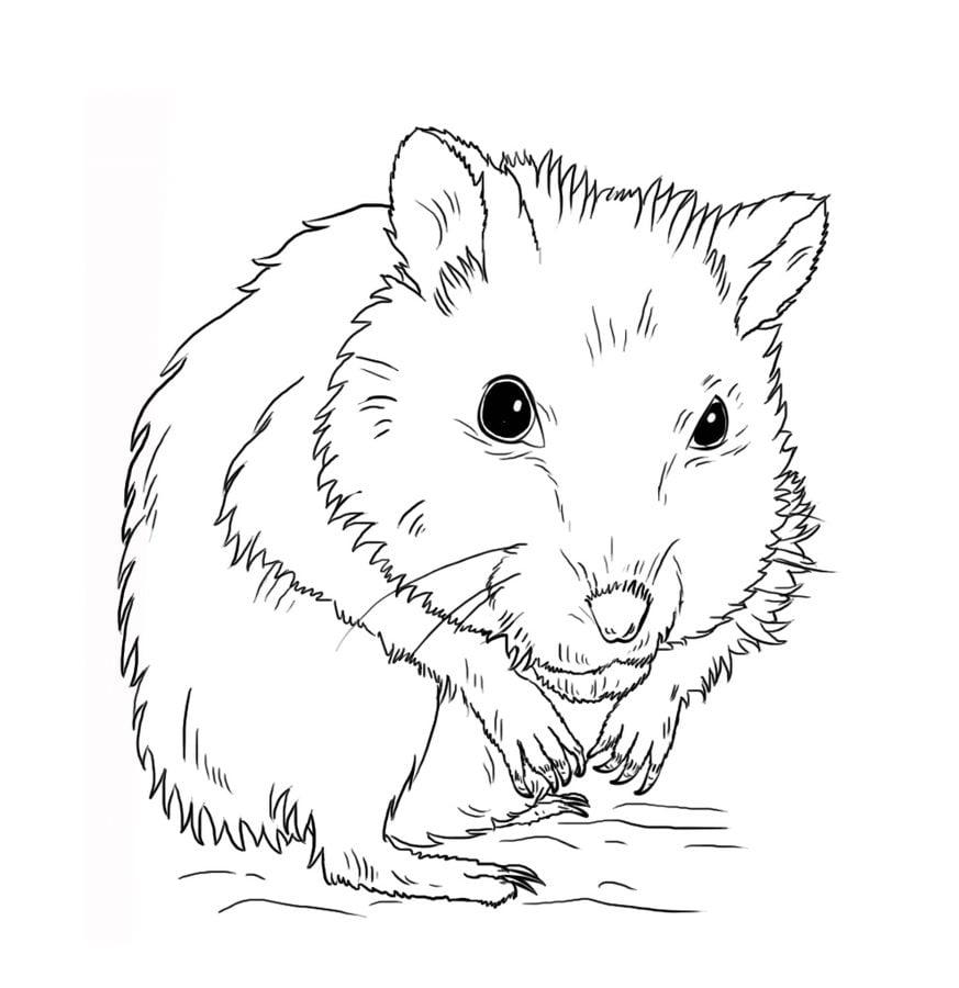 Ausmalbilder Hamster Zum Ausdrucken Kostenlos Fr