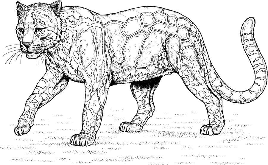 Ausmalbilder Ausmalbilder Leopard Zum Ausdrucken Kostenlos Für