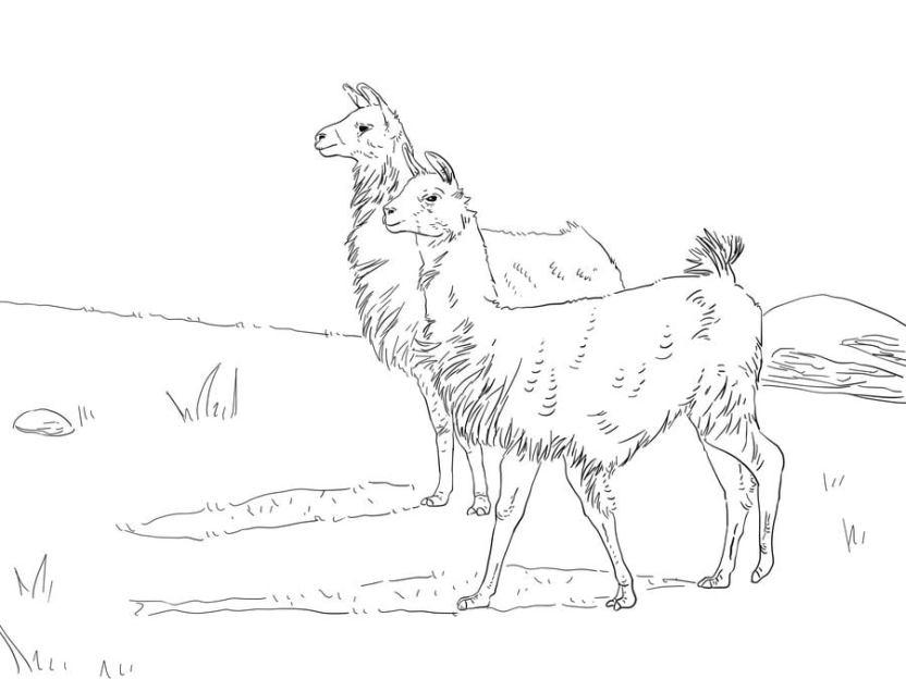 Dibujos Para Colorear Llama Imprimible Gratis Para Los