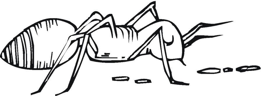 disegni da colorare disegni da colorare formiche